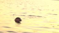 Slow Motion Woman in Water video