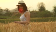 HD Slow motion:Woman in summer sunset at wheat field. video