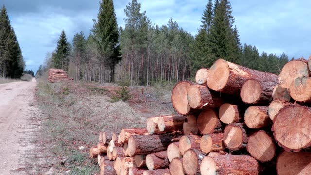 Slowly moving camera focusing on pile of logs video