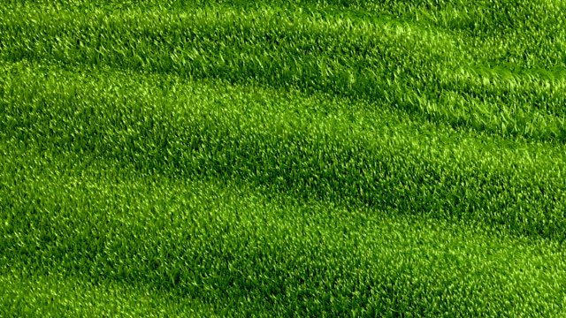 Slowly waving grassy background video