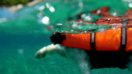 HD Slow-Mo: Swimming Dog in a Life Jacket video