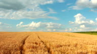 Slow-motion: Crane shot of blue sky, clouds and wheat fiel video