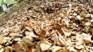 Slow-motion footage: dog is very happy to dig himself up in leaves and enjoy different flavours video