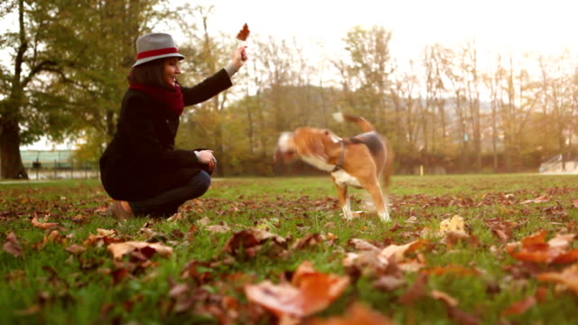 Slow-motion footage of a woman playing with her beagle on the autumn day video