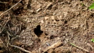 Small ant nest video