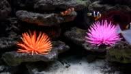 Small bright fish at ocean bed video