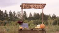 Small business pumpkin stand video