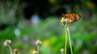 small butterfly fly video