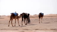 A small caravan of camels and beduins walking on the plains appoaching the sand dunes video