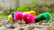 Small chicks video