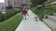 (HD1080i) Small Child Walking Dog, Zoom In video