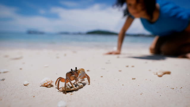 Small crab stands on a rock on a sandy beach. Girl looking at marine life which then ran to her. Sea and blue sky on the background video