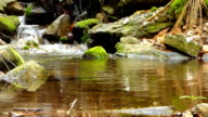 Small creek in forest video