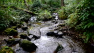 Small creek of water of Siriphum waterfall one of the famous waterfall at Doi Inthanon National Park, mountain in Chiangmai, Thailand,  video footage. video