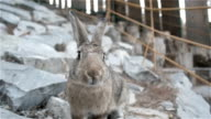 Small Cute Rabbit With Brown Fur In Zoo video