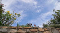 Small dog barking with blue sky video