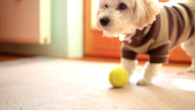 Small dog is having fun video