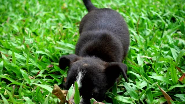 Small dog run through grass video