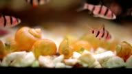 small fish on the aquarium video