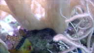 Small fish that live in the coral reefs sea. video