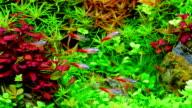 Small fish video