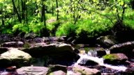 Small forest river. video