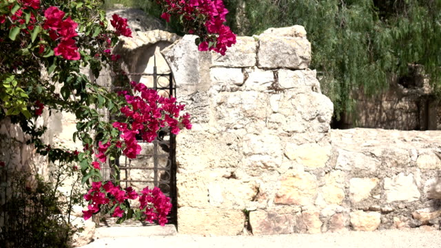 Small Gate with Flowers in Church Courtyard video