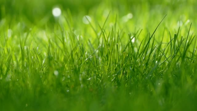small grass lawn slow motion video video