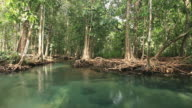 small lake in swamp forest 1080p video