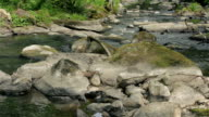 Small mountain river in summer time video