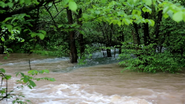 Small river after Rain video