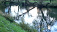 Small river. Camera movement video