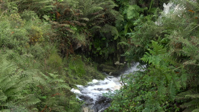 Small Scottish waterfall in rural Dumfries and Galloway video