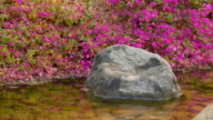 A small stream. Blossoming shore video