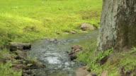 Small stream in a green park of Peterhof, Saint Petersburg video