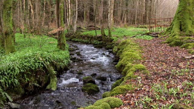 Small stream running through the Scottish countryside video