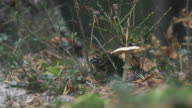 Small tiny mushrooms growing on the tree trunk. video