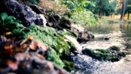 Small waterfall in autumn in slow motion with leaves rocks and vegetation video