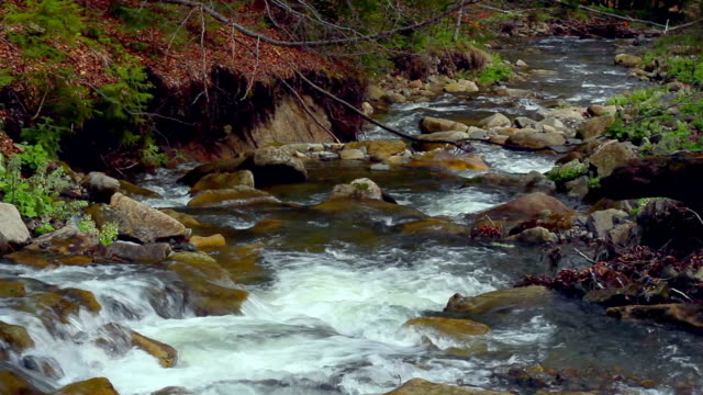 Small waterfall in spring. Landscape of small mountain river flowing in forest. Rapids and foam in mountain river. Shot in Carpathian Mountains, Ukraine, in spring video