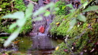 Small waterfall in the Rain forest video