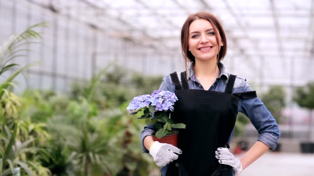 Smiling beautiful florist with hydrangea video