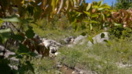 A smooth transition with a single branch of a Bush. Crimea. Zelenogorie video