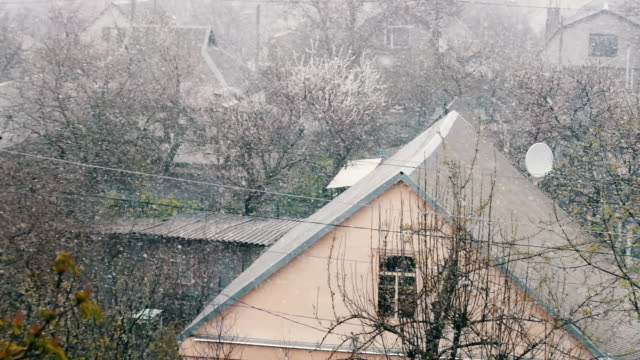 Smow in spring.Snow falls on the street trees in green foliage and blooming. video