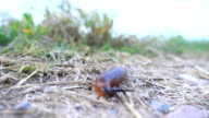 Snail Crawling in the Countryside video