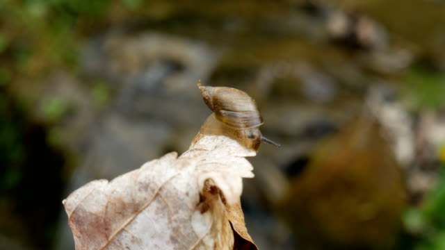 Snail Crawling on a Dry Sheet video