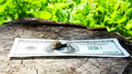 Snail crawling on money video