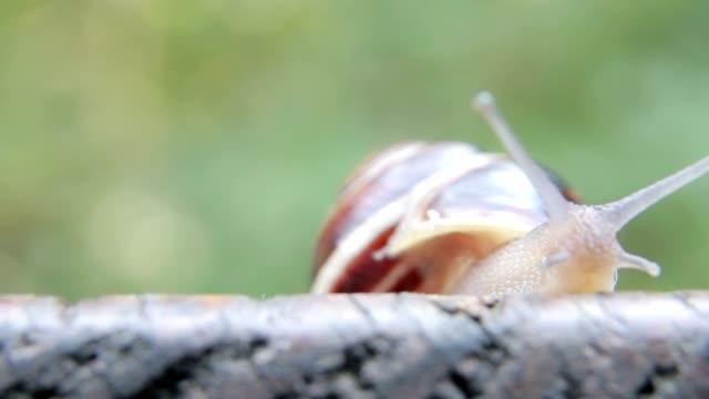 Snail crawling video