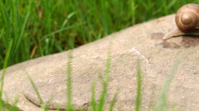 snail crawling (dolly shot) video