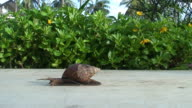 Snail  HD video