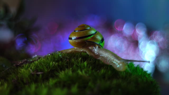 Snail in the forest video